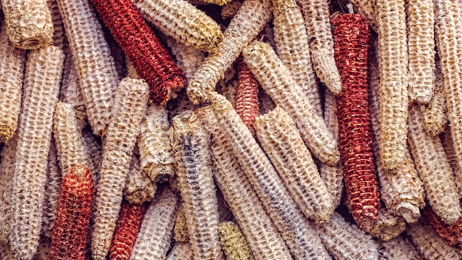 bare-corn-cobs-use